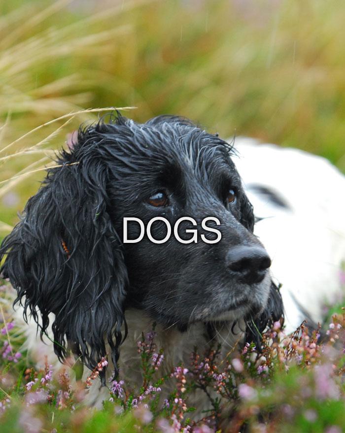 Dogs accessories & Wear